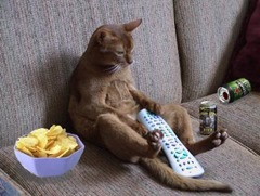 couch_potato_cat